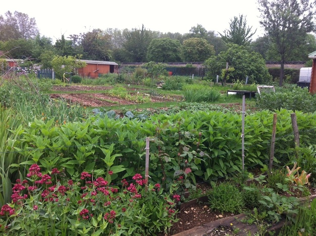 My Views Of French Gardening Are Shaped In Part By My Experiences Tending  An Allotment Garden On The Outskirts Of Dijon. Compared To Allotment Gardens  Iu0027ve ...